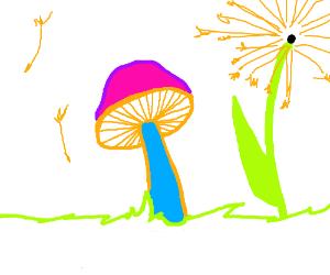 Well drawn mushrooms