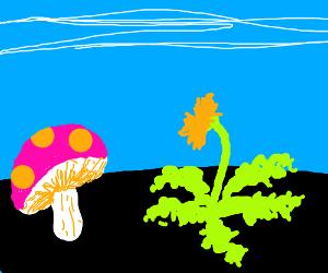 Mushroom and Dandelion