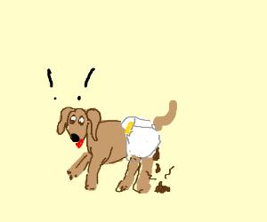 dog wearing diapers craps itself