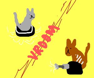 roomba cat VS dyson cat