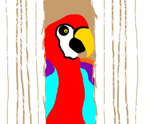 """Heeeeeere's Polly!"" *Squawk*"