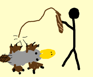Man tortures grey platypus