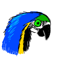 1/2 of a Macaw