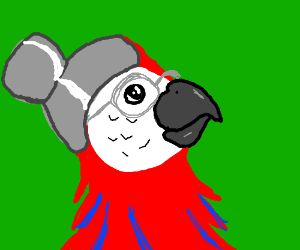 and old parrot