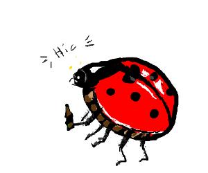 Drunk ladybug