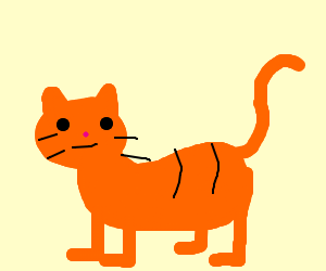 An Orange Cat