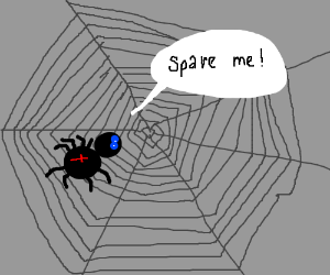Spider requests to be spared