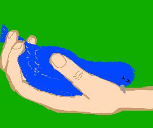 Dead bird in hand