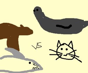 bear shark vs seal cat