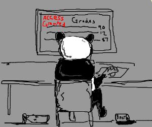 Alcoholic pandas hack into school gradin systm