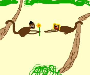 A monkey gives a girl monkey a flower