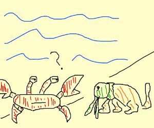 Crab not sure if he's met another sea animal