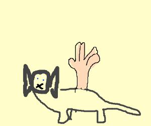 Spok cat