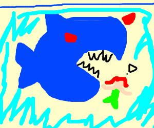 Blue shark chasing mermaid.