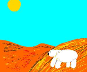 Polar bear in a sandy desert