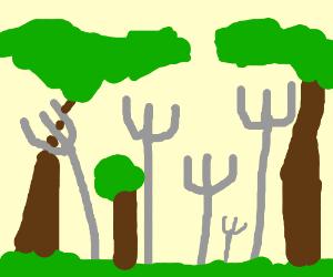 Forest of forks.