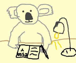 koala writing a novel koala writes school essay