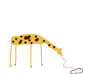 giraffe trying to lick cocaine