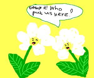 Damn it! Who put two damn flower herc??
