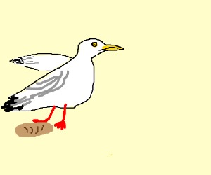 Herring Gull steals your bread