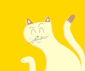 Sassanian the sassy Persian cat.
