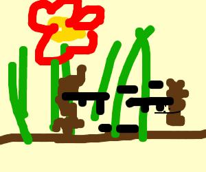 garden battle plan