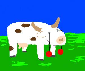 cow with sh*t yo yo eyes