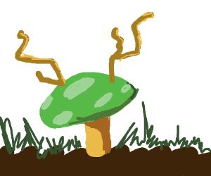 Deer fungus