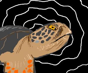 hypnotic turtle