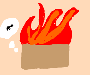 Ant wondered by a box on fire