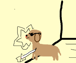 Blind dog hitting a wall