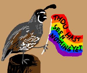 Queer quail quietly quotes Quixote