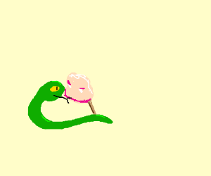 A snake eating cotton candy.