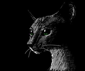 Siamese cat in the night