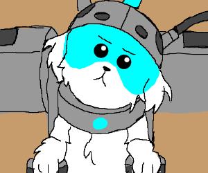 Puppy rocketeer