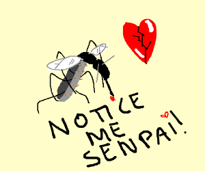 Why don't you love mosquito's back
