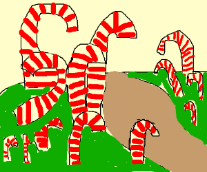 candycane forest