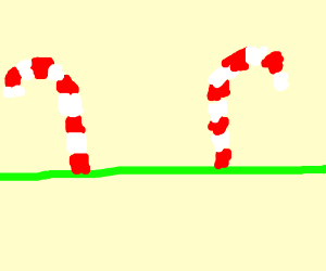 Candy Cane Forest