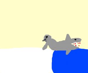 Seal Shark hybrid