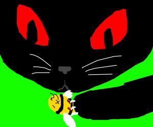 Evil eyed cat kills a bee