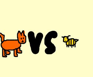 Cat vs bee