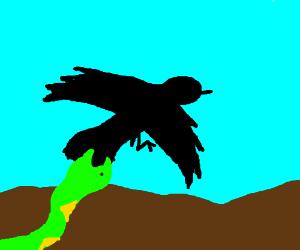 snake bites crow