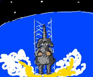 NASA now uses elephants as rockets