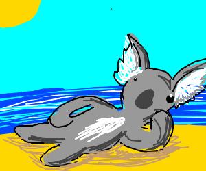 Koala on the beach