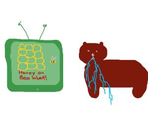 Bear drools over Honey on Bee week TV