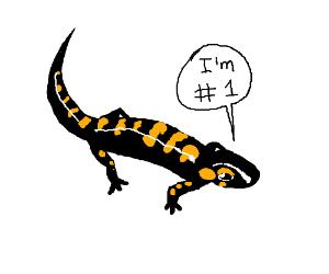 The #1 Salamander
