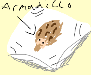Armadillo on a pillow