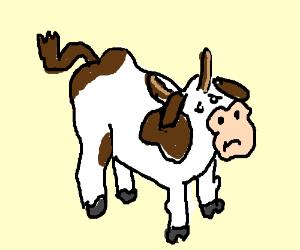 Sad Bull