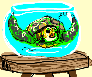 Turtle in round fishbowl