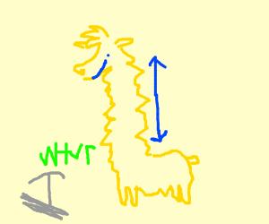 Urist likes llamas for their long necks